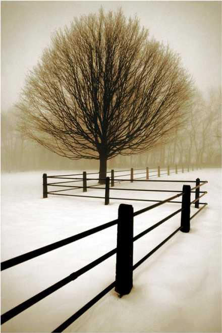 Solitude by David Lorenz