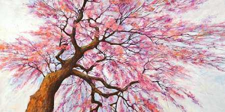Sotto l albero in fiore