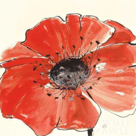 Spring Poppy IV