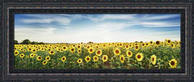 Sunflower Field by Frank Krahmer