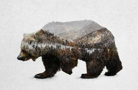 The Kodiak Brown Bear