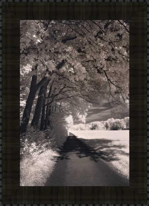 The Path Ahead SP
