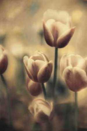 Tinted Tulips III