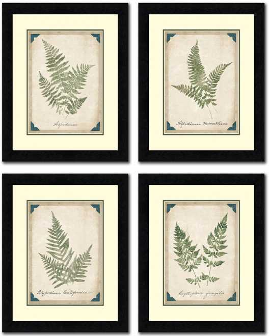 Vintage Ferns Set of Four