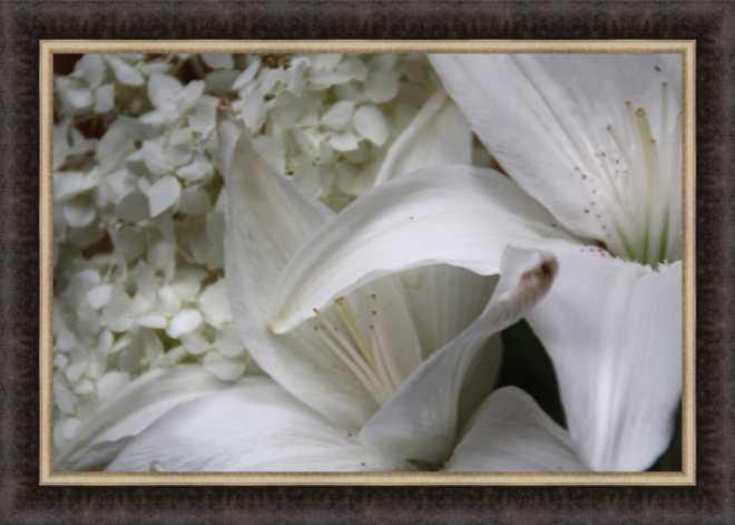 White Lily by Bill Kellett