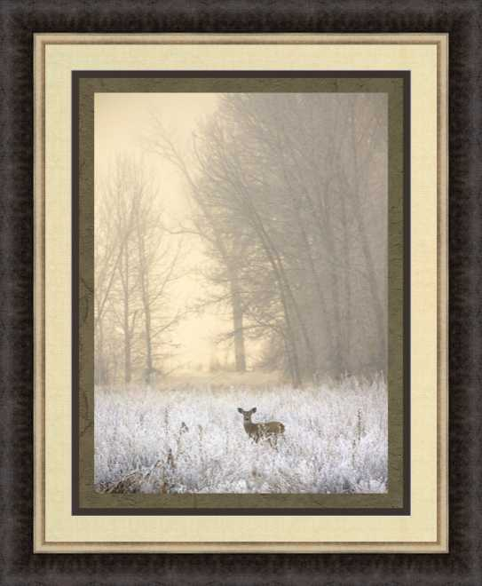 White-Tailed Deer in Fog by Jason Savage