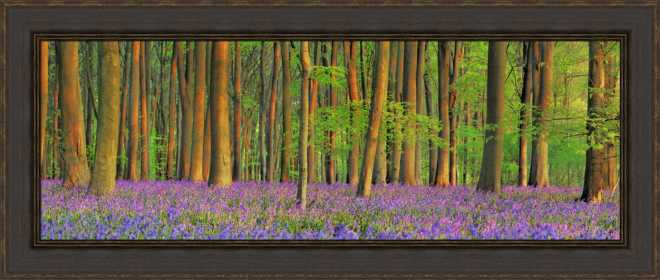 Beech Forest with Bluebells by Frank Krahmer